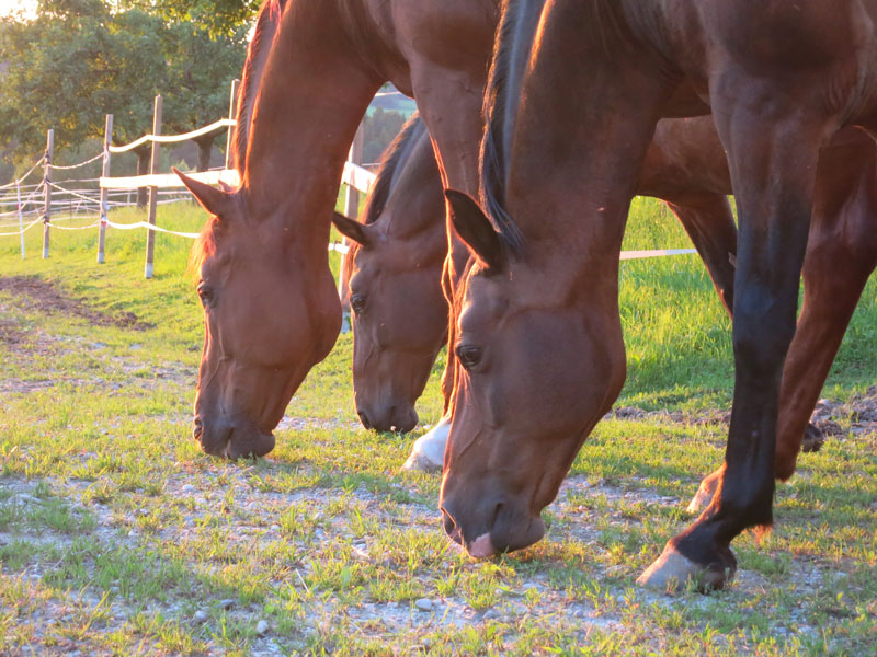 Horses outside and free – the mission of HORSE ENERGY®