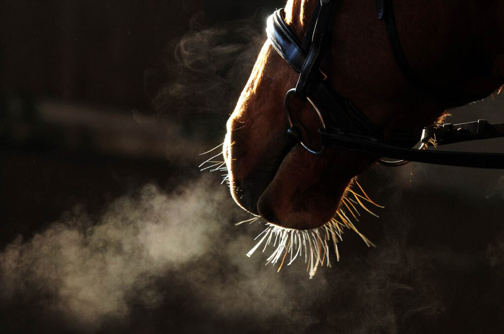 Horses with head shaking: Prevent longterm consequences